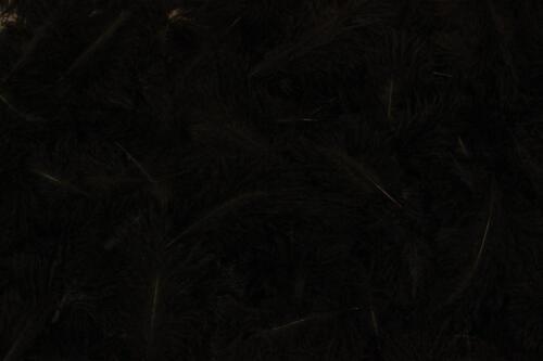 Black-No.2
