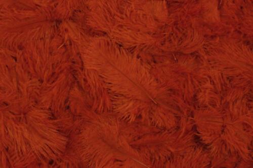Burnt-Orange-No.23