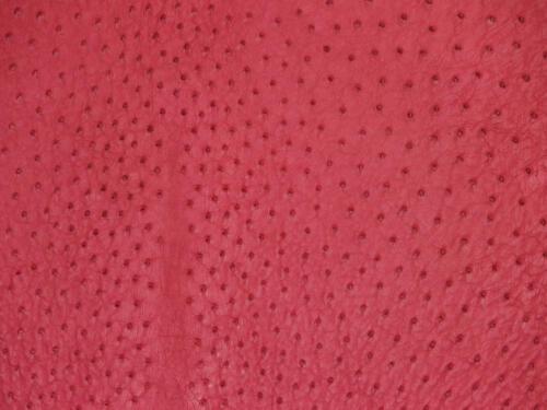 Fuschia-Pink