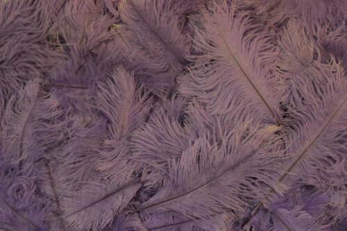 Lilac-No.12