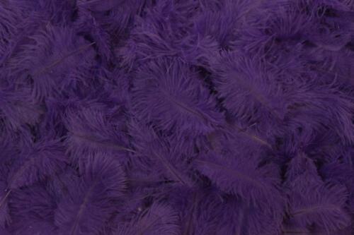 Purple-No.11